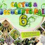 succulent fair