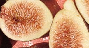 Fícus cárica cv Black Jack 35
