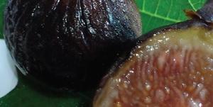 Fícus cárica cv Black mission 35