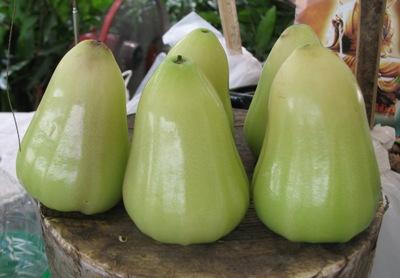 Syzygium samarangense 'Keaw Amphan' 30