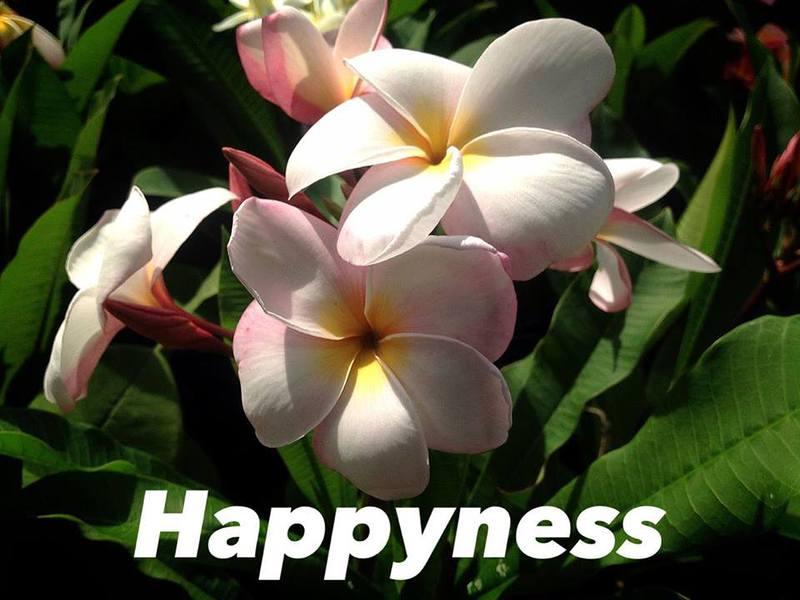 plumeria happyness 20