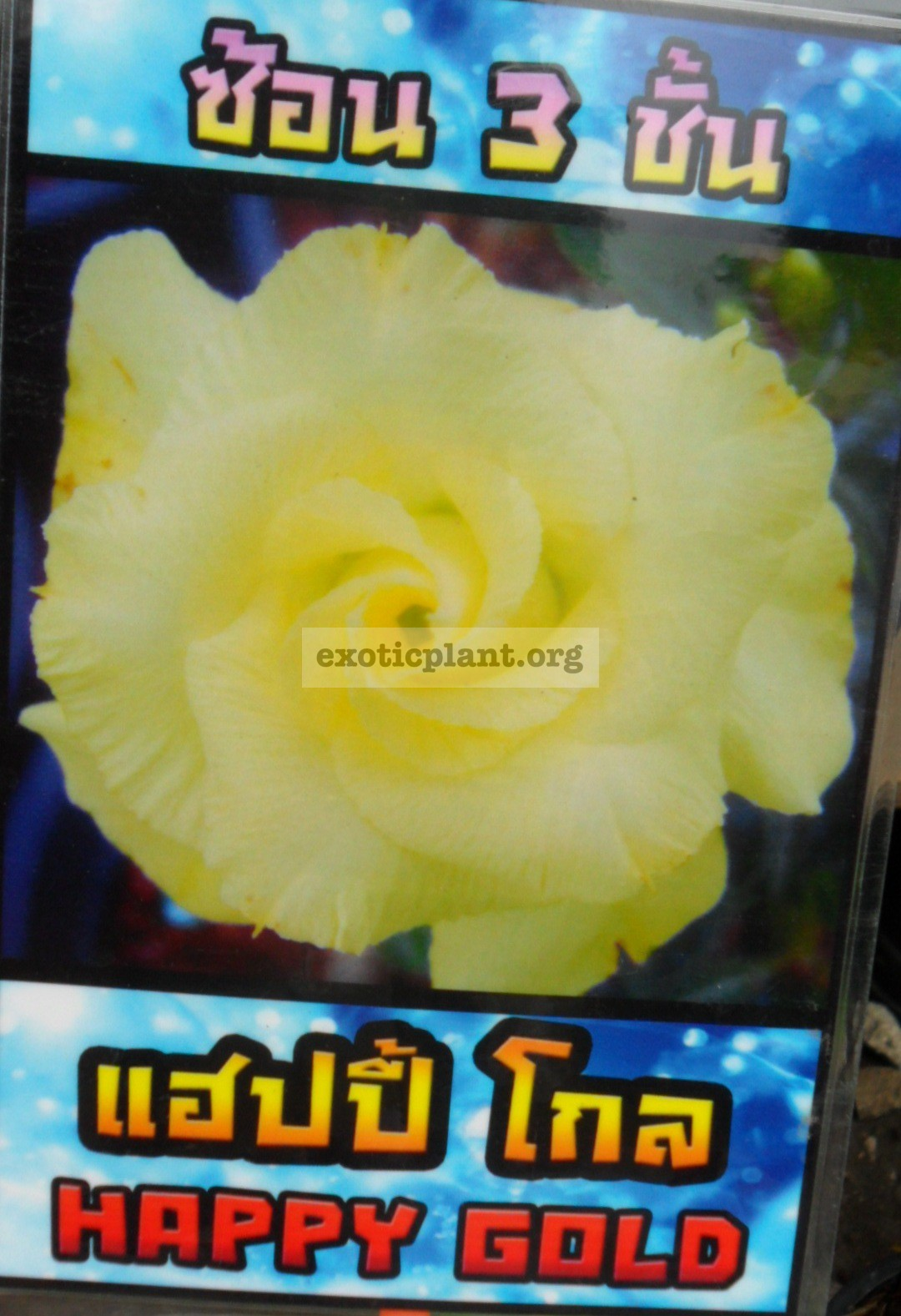 adenium Happy Gold 25