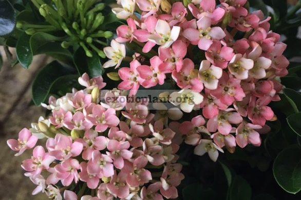 Редкие цветы купить сп купить ирисы букет цветы