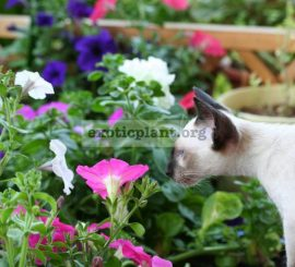 Кошка vs Фикус, зачем кошки едят растения и как с этим бороться.