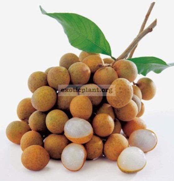 Dimocarpus longan 'Edor' (grafted)(fruit tree) 40 Некрупные сладкие плоды