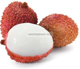 Litchi (grafted) 30