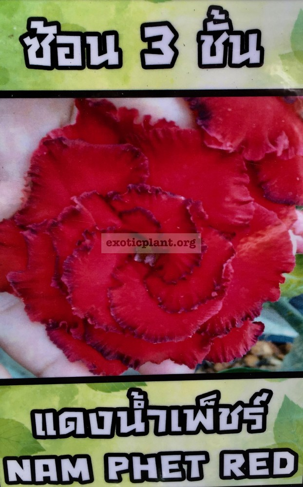 adenium Nam Phet Red 25