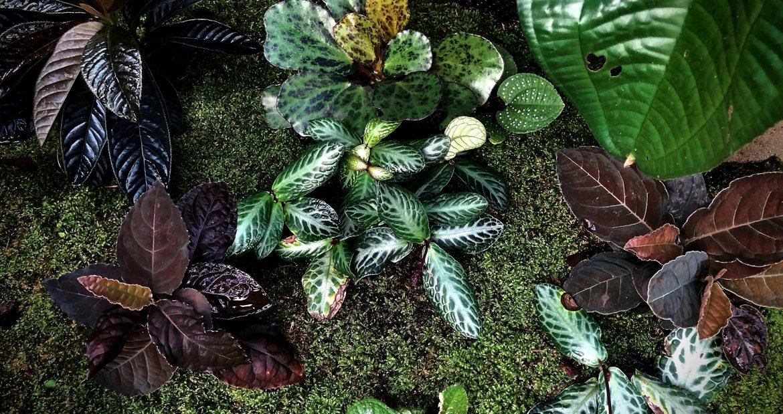 Примеры растений, которые мы получали