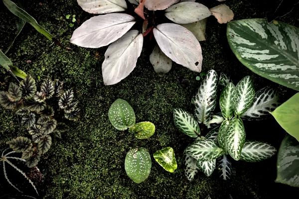 Общие рекомендации по адаптации растений