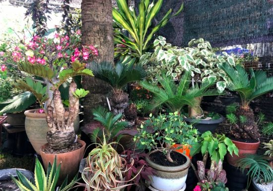 Фотокаталог растений для заказа