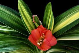 Коллекция Кливия (Clivia)