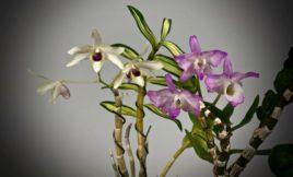 Частная коллекция растений