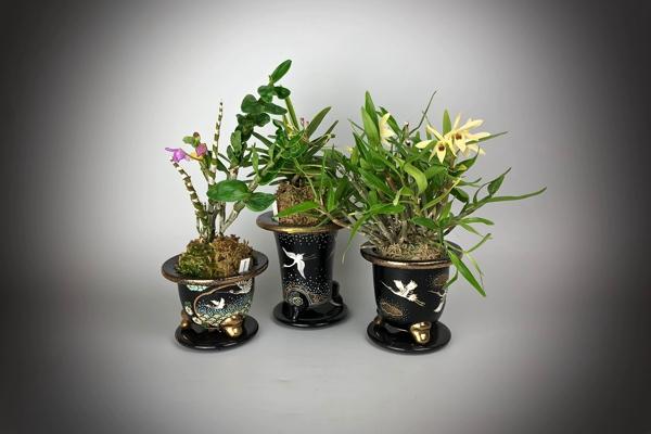 Японские орхидеи