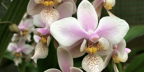 Коллекция Другие орхидеи (orchid)