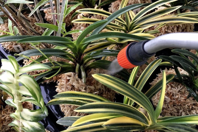 Подготовка комнатных растений к зиме, общие правила полива