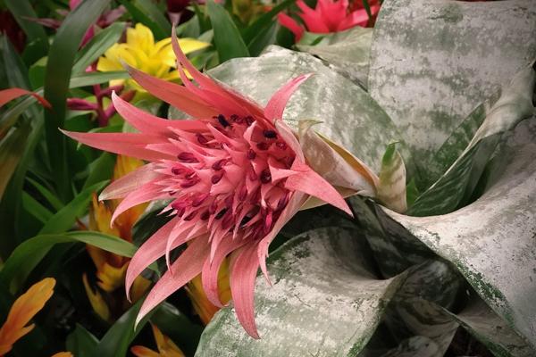 Суеверия и мифы в мире растений, типичные ошибки при пересадке растений