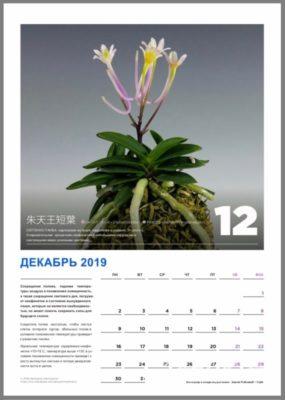 calendar page 13