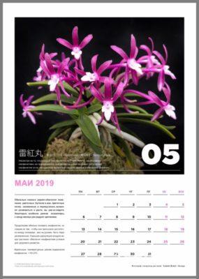 calendar page 6