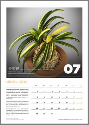 calendar page 8