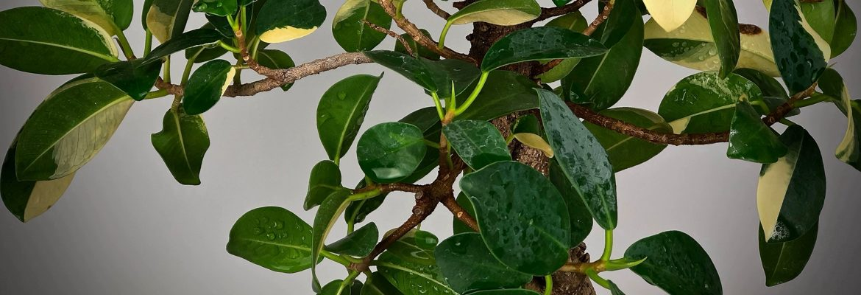 Коллекция – растения, не вошедшие в другие разделы