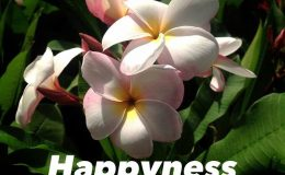 plumeria-happyness-20
