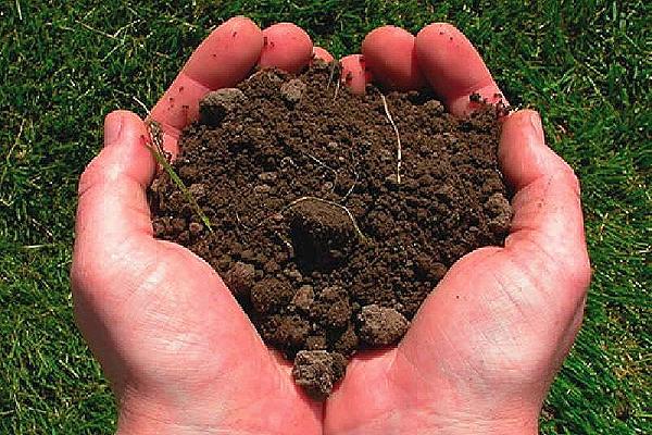 Развенчиваем мифы. Миф 5. Для того, чтобы обеззаразить почву, необходимо ее пропарить или прожарить.