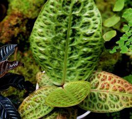 Открыт заказ редких коллекционных растений на ДЕКАБРЬ!