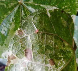 Великий и ужасный вирус (Триллер из жизни растений)