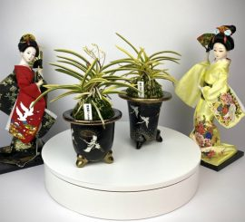 Чем отличаются неофинетии Fukiden 富貴殿 и Mangetsu 満月