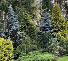 Фукиран, Тёсейран, Райский сад и… Кот – в гостях у Ларисы Клюевой