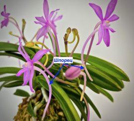 Цветение неофинетий, разбираемся в тонкостях, японская терминология