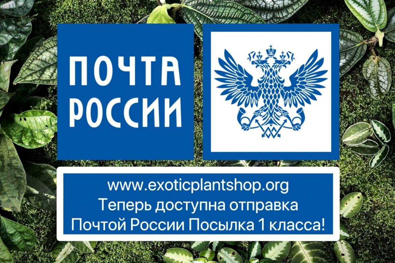 Теперь вы можете сделать заказ с доставкой Почта России Посылка 1 класса